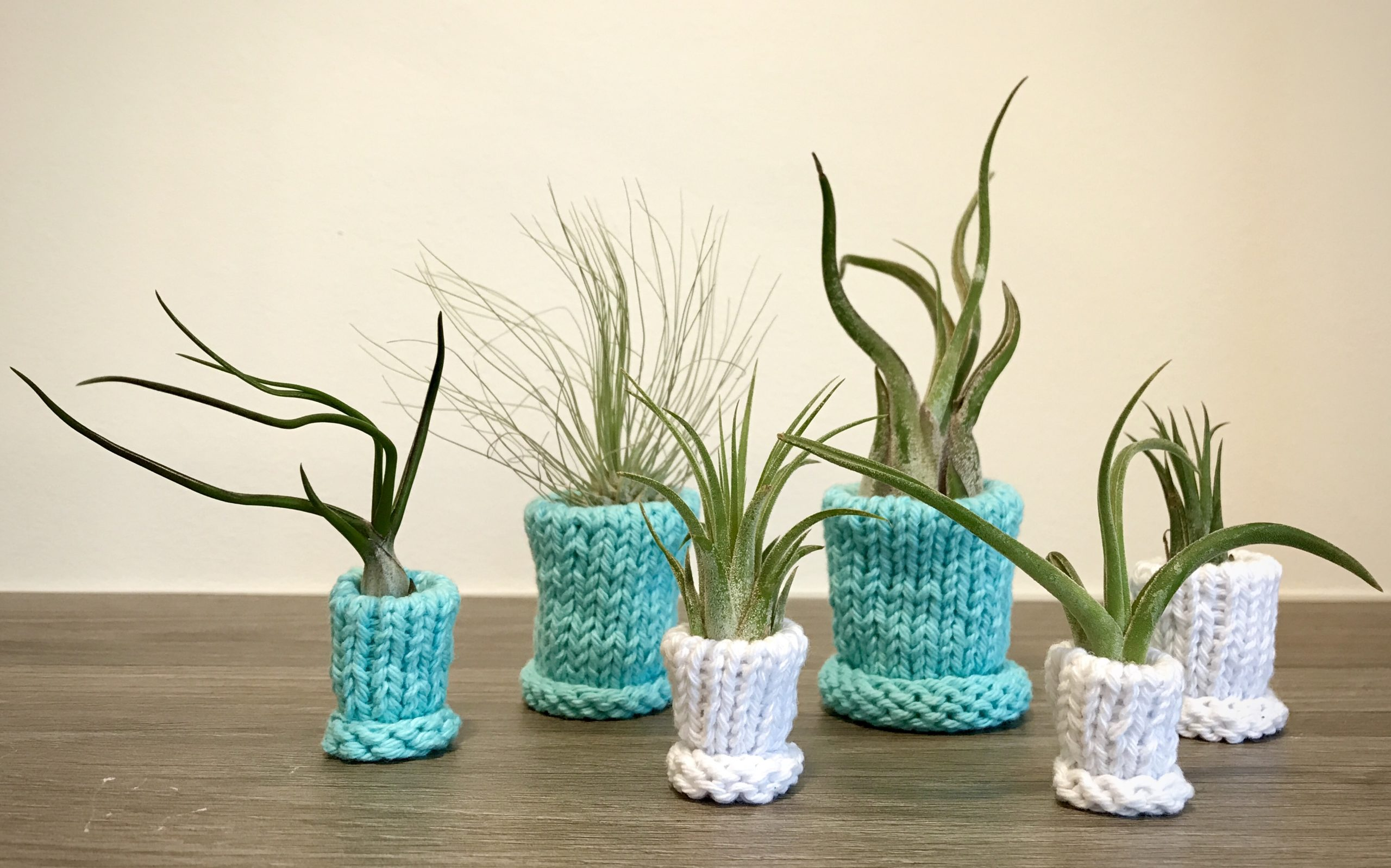 "My husband and I are tucked away at home without kids or pets, so I decided to spoil our family of air plants with handmade knit """"sweater"""" planters. Our time at home may just take us to the next level of crazy plant parents. Materials: 100% cotton yarn"